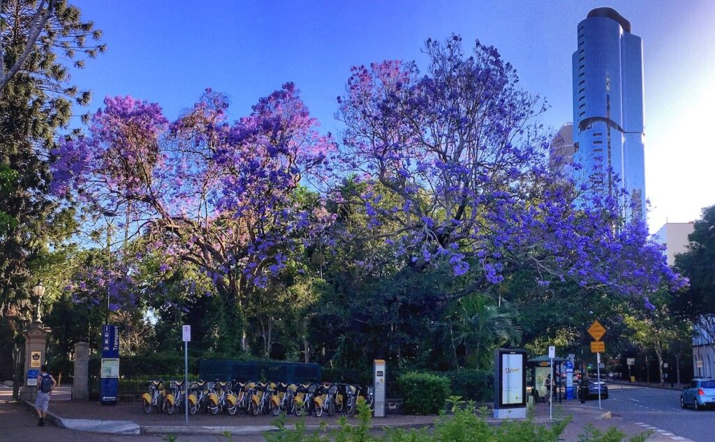 Brisbane CBD Botanic Garden