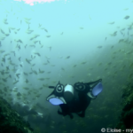 Scuba Diving Byron Bay: The Best Experience at Julian Rocks Marine Reserve