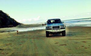 4WD and Dingo encounter on K'gari (Fraser Island)