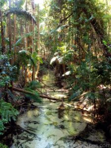 Kgari - Fraser Island - Rainforest