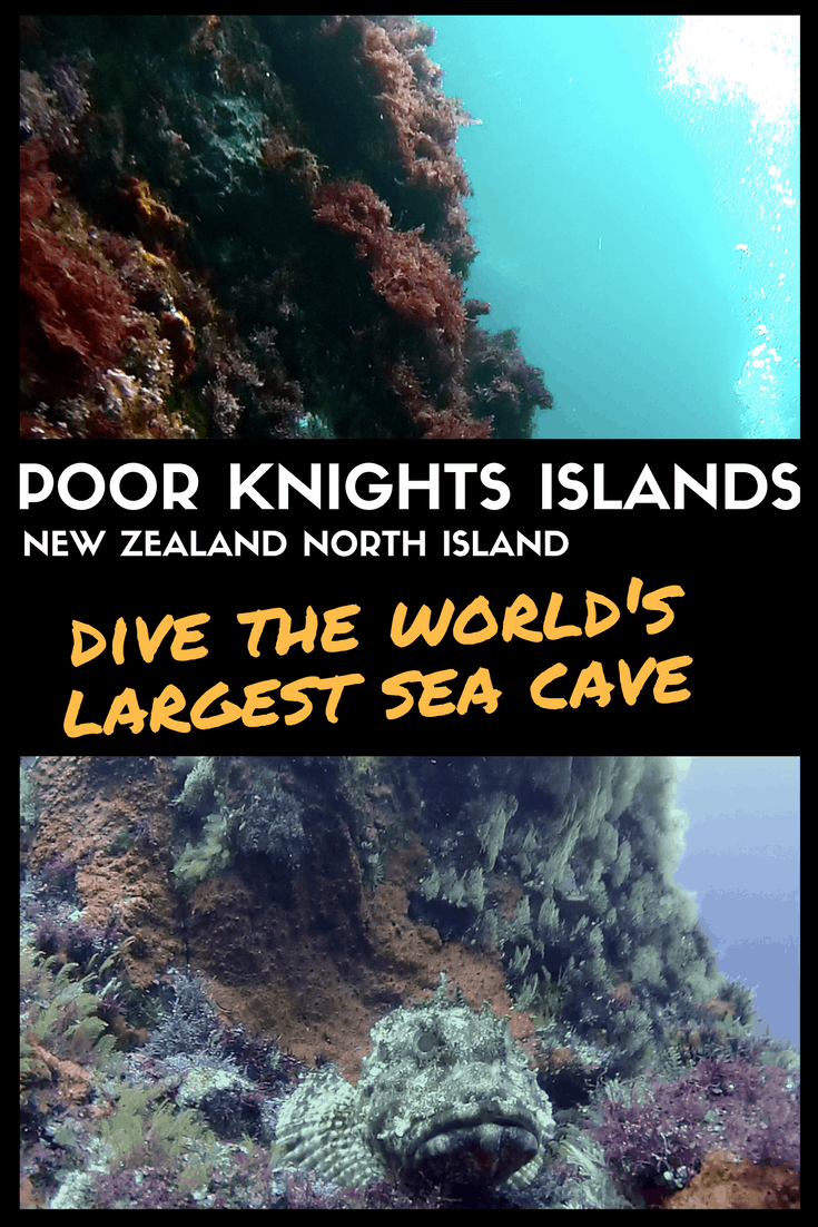 Poor Knights Islands New Zealand North Island Diving Site