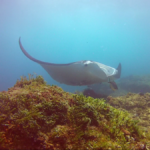 Scuba Diving Stradbroke Island: Manta Rays, Grey Nurse Sharks, And More!