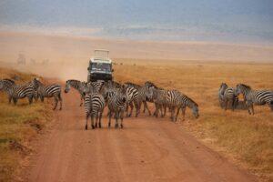Africa-Safari-Zebras.JPG