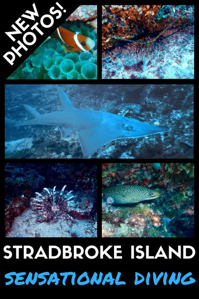 STRADBROKE ISLAND Diving