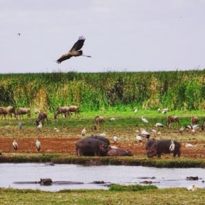 Safari in Tanzania - Lake Manyara