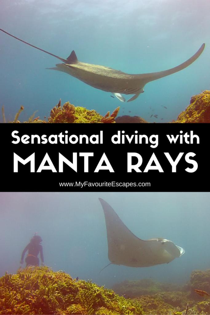 Stradbroke Island diving manta rays