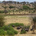 Safari in Africa, Day 1 - Tarangire: What A Great Start!