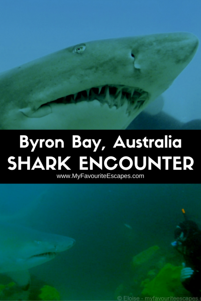byron bay australia dive grey nurse sharks