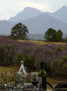 07 kooroomba scenic rim Wine Lavender