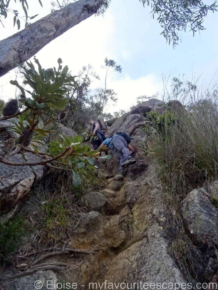 Mount Barney Hike Going Up SE Ridge