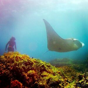 Stradbroke Island Things To Do - Scuba Diving with Manta Rays