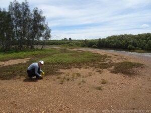 Clean up australia day boondal wetlands elo