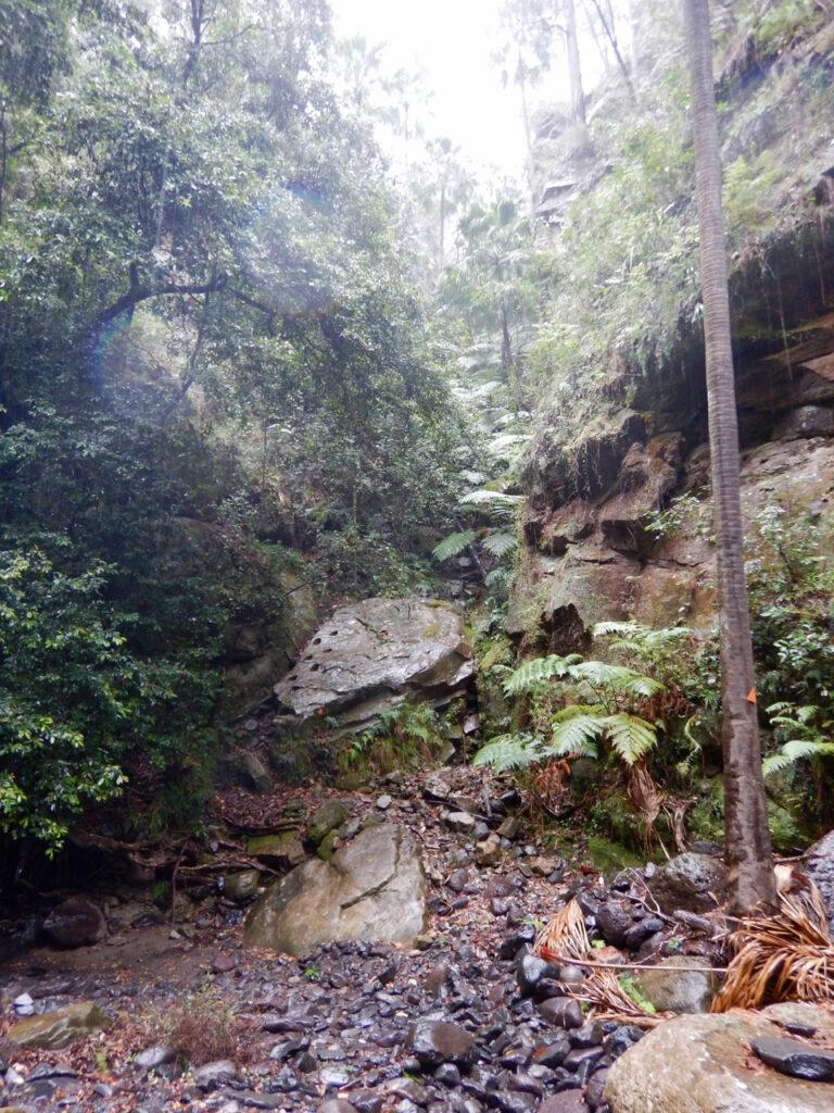Carnarvon Gorge - Boowinda Gorge Way Up
