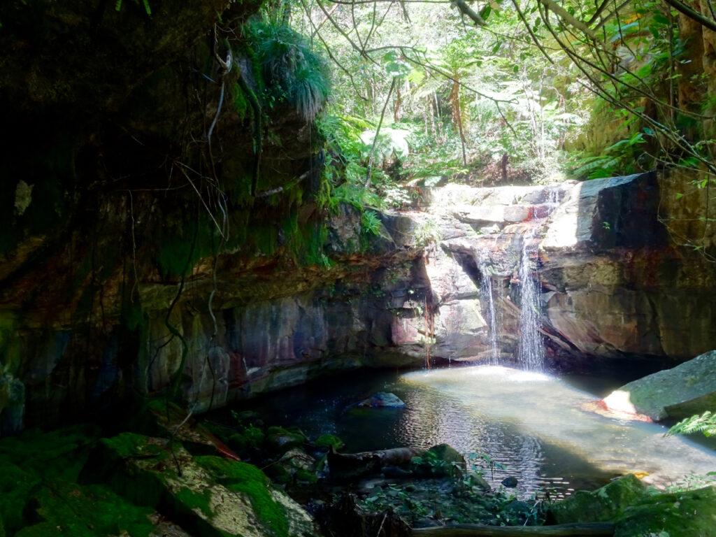 Carnarvon Gorge - moss garden 2