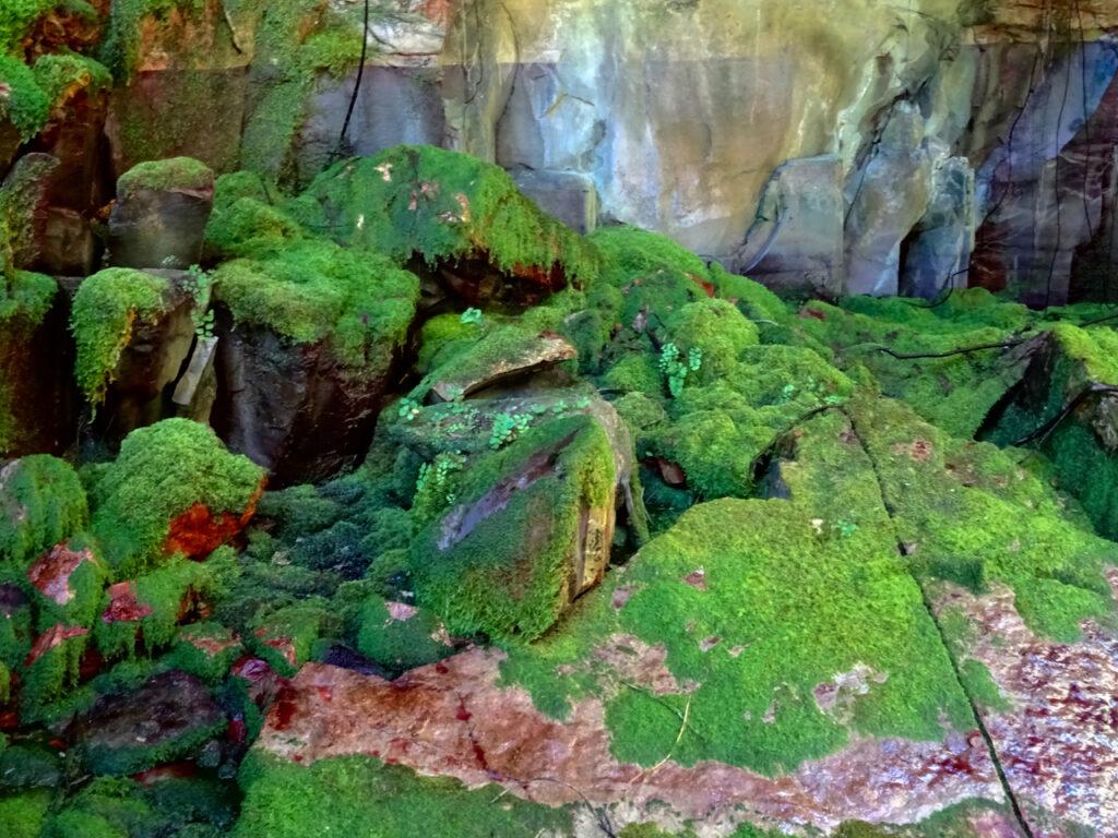 Carnarvon Gorge - moss garden 3