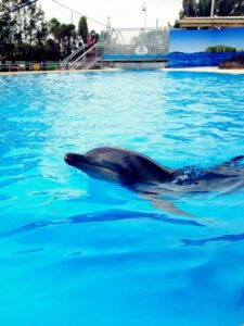 dolphin-swim-australia