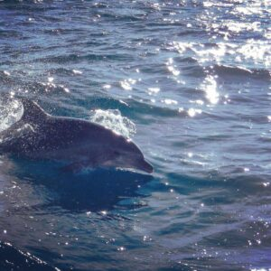 mooloolaba dolphin