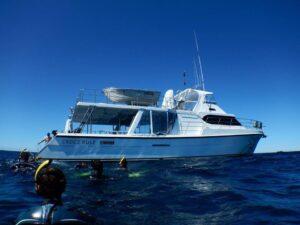 sunreef boat swim with whales mooloolaba