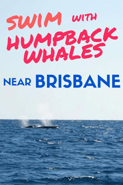 swim-with-humpback-whales-brisbane