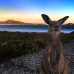 Lucky Bay - Cape Le Grand National Park