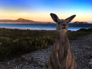 Lucky Bay Australia - Cape Le Grand National Park