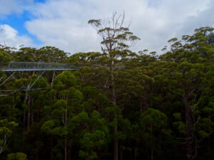 Western Australia - Valley of the Giant Tree Top Walk