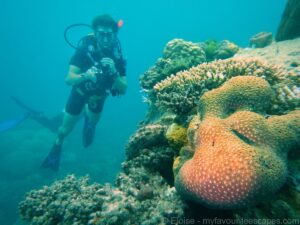 cairns_-_diving_great_barrier_reef_-_coral_+_ben (c)