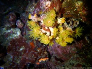 cairns_-_diving_great_barrier_reef_-_coral_polyps