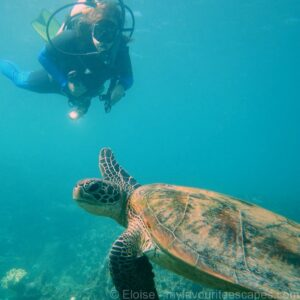 cairns_-_diving_great_barrier_reef_-_turtle_01 (c)