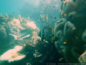 cairns_-_diving_great_barrier_reef_02