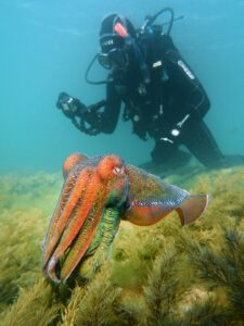 whyalla - cuttle fish 08
