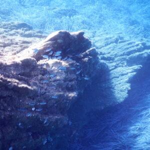 port cros snorkelling 01
