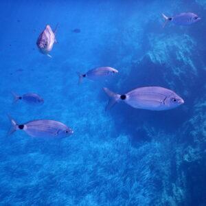 port cros snorkelling 03