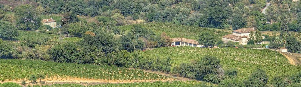 Gassin - Vineyards