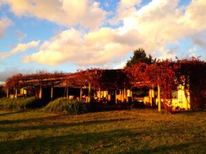 Granite Belt Winery - Autumn