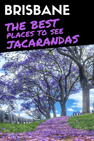 The best places to see jacarandas in Brisbane 01