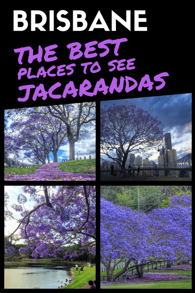 The best places to see jacarandas in Brisbane 02