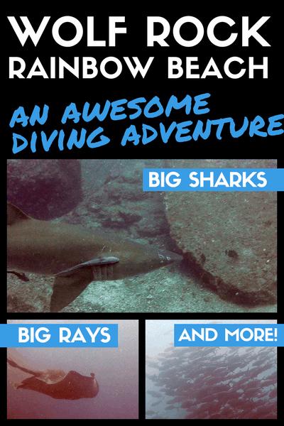 rainbow beach diving wolf rock