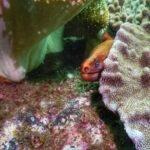Cook Island Dive - Brisbane - Moray eel