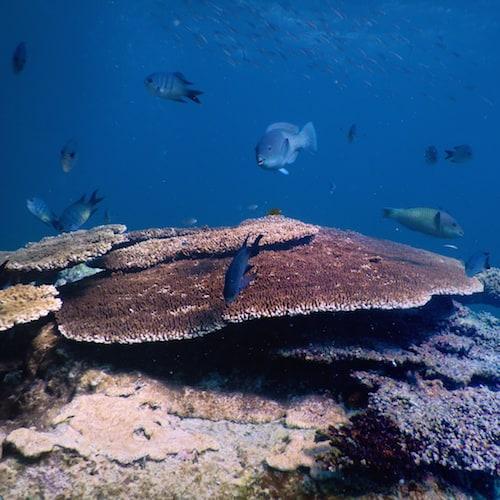 Heron Island - Dive 03