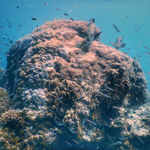 Heron Island - Dive 05