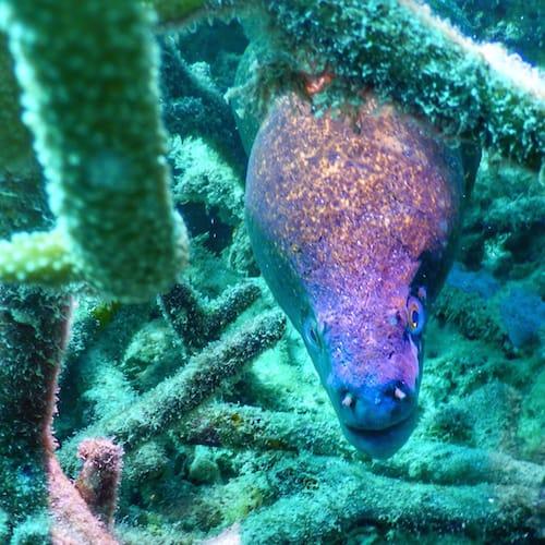 Heron Island - Dive 07