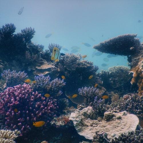 Heron Island - Dive 10