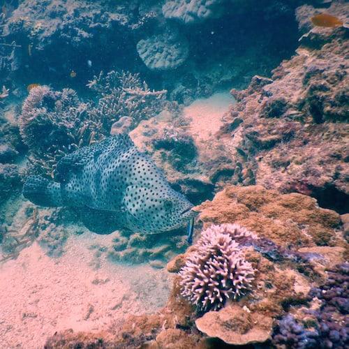 Heron Island - Dive 11
