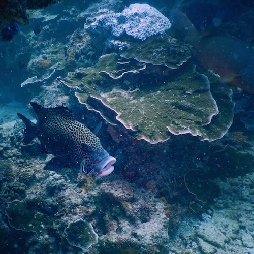 Heron Island - Dive 12