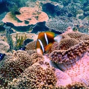 Heron Island - Dive 13