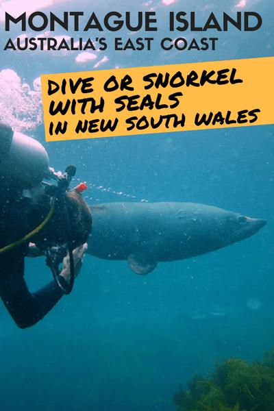 MONTAGUE ISLAND - dive snorkel seas new south wales
