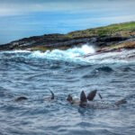 Montague Island/Narooma: Close Encounter With Wild Seals & Penguins in NSW