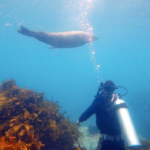 Montague Island Dive with Seals 03