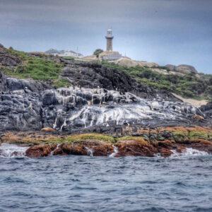 Montague Island Lighthouse Seals Birds